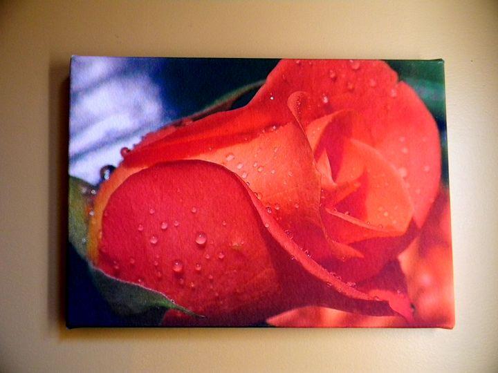 A Rose_Canvas Giclee Print - Chameleon Canvas Art