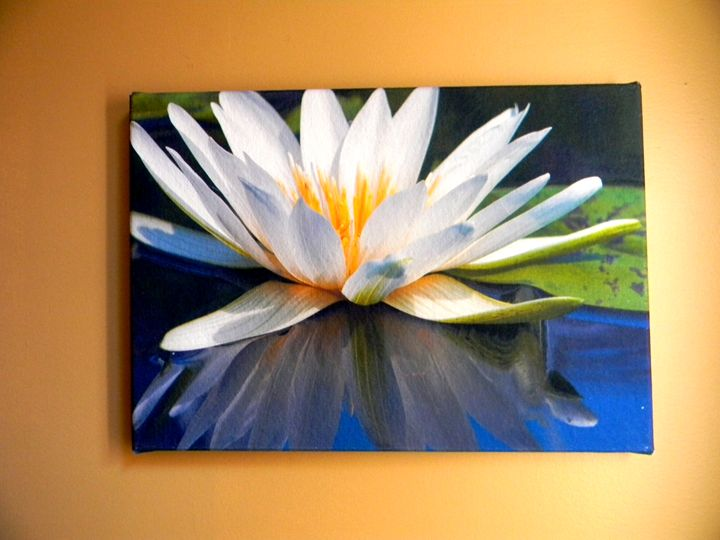 A Withe Water Lily - Chameleon Canvas Art