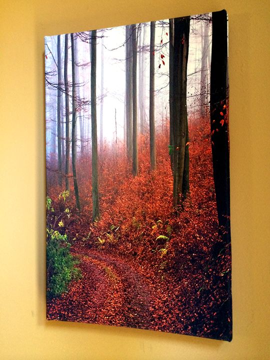 Mist in the Forest - Chameleon Canvas Art