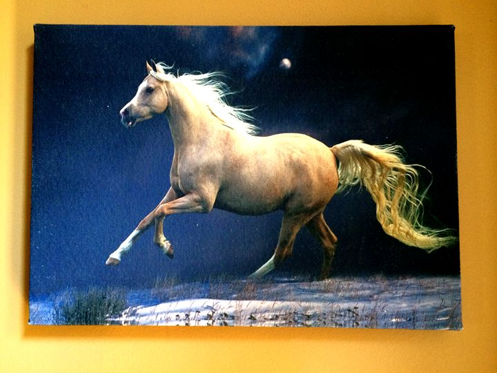 A Horse - Chameleon Canvas Art