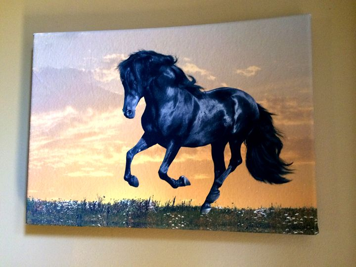 A Galloping Horse - Chameleon Canvas Art