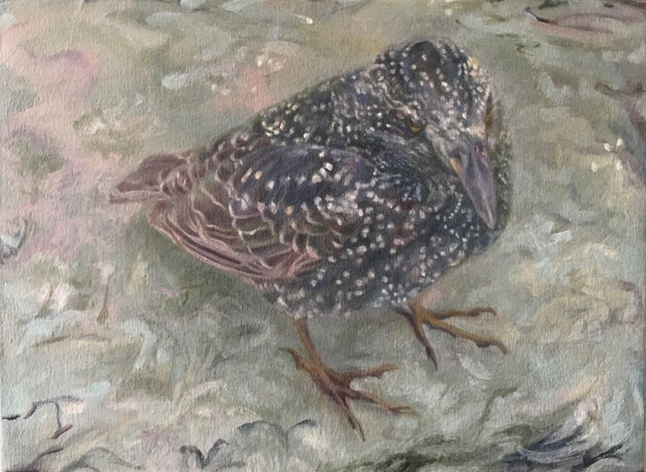 WinterStarling (facing right) - LSAuth Art
