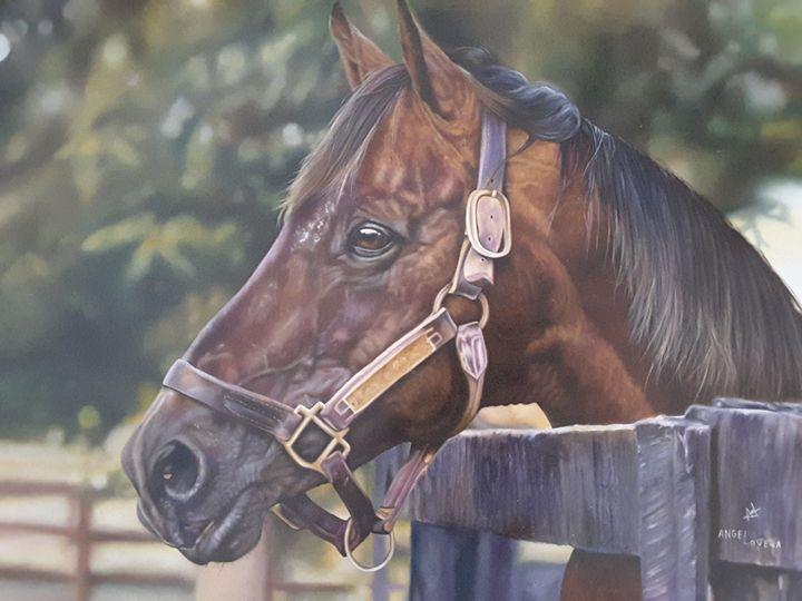 Brown horse - Angel Lovera
