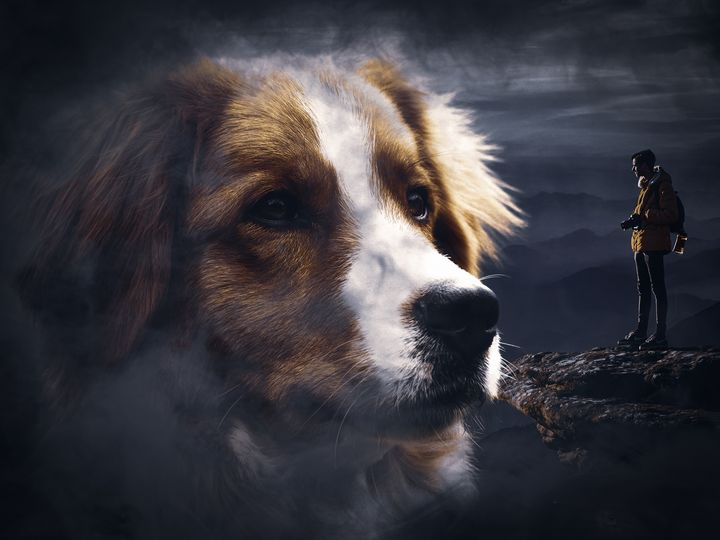 Beautiful dog fog - Alem Coksa