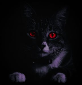 Cat red eyes