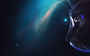 Cat portrait galaxy