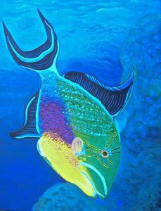 Queen Trigger Fish