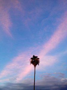 Phoenix Palm Sky