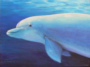 Dolphin Power Animal Spirit Guide
