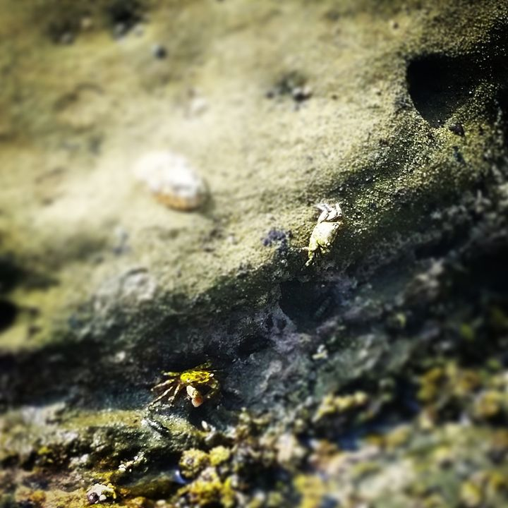 Crabby friends - Undeadgrin