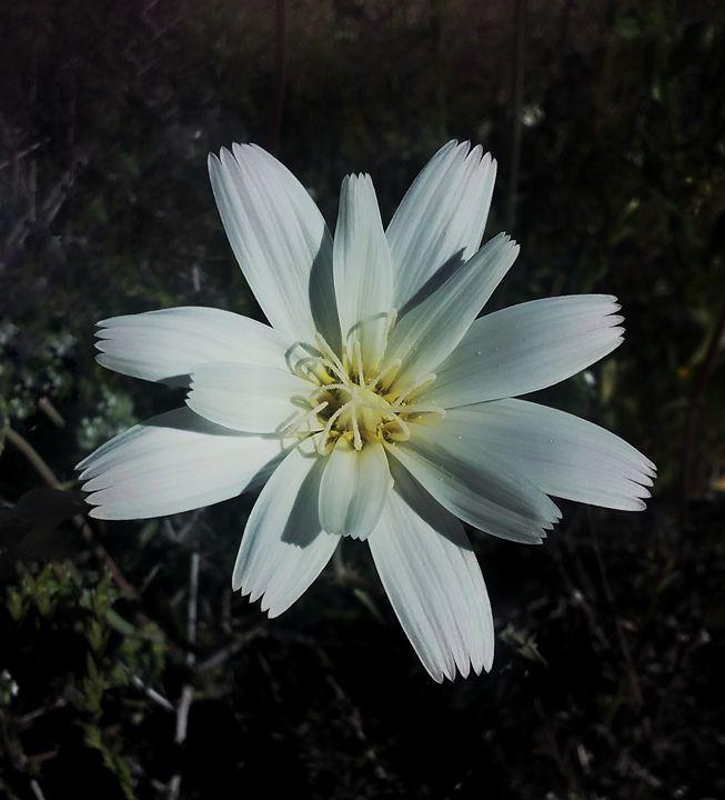 white flower - XWulfyX