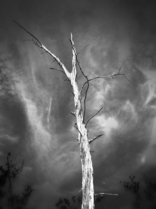 Life After Death - Black Nature