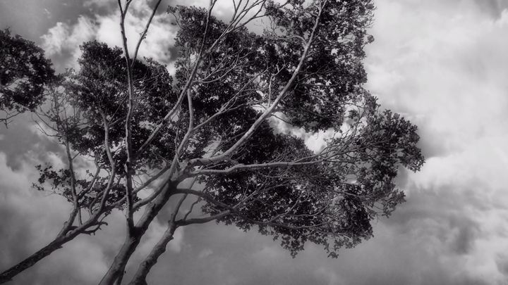 Summer Grey 2 - Black Nature