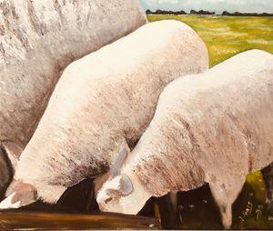 Tom Morgan's Sheep