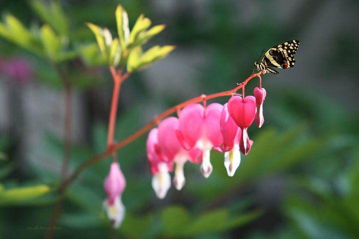 Butterfly and Hearts - GabriellasArt by Gabriella Weninger-David