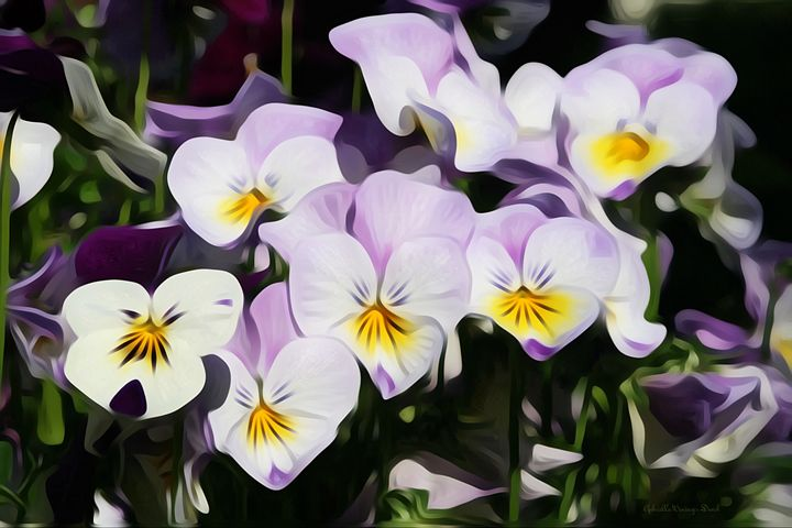 Lovely Pansies - GabriellasArt by Gabriella Weninger-David