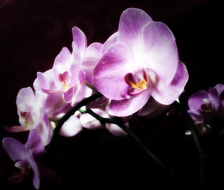 An Orchid for you - GabriellasArt by Gabriella Weninger-David