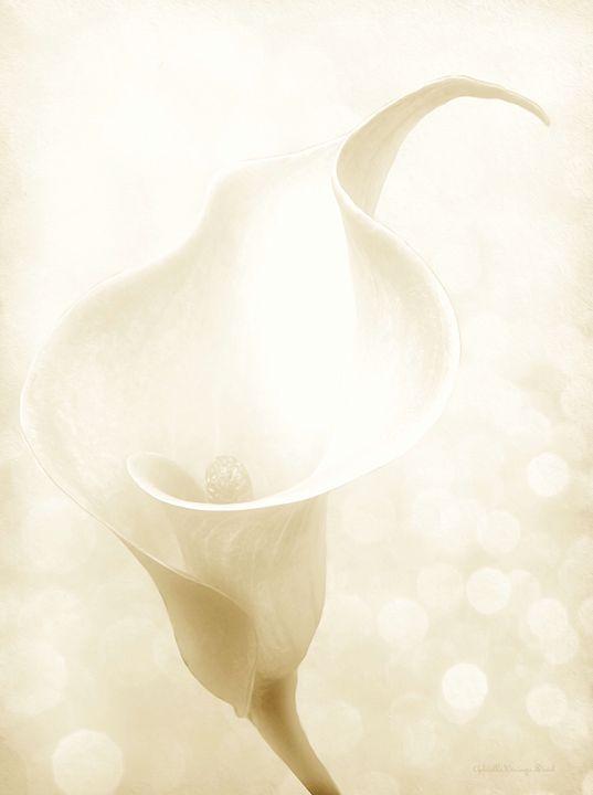 Enchanting - GabriellasArt by Gabriella Weninger-David