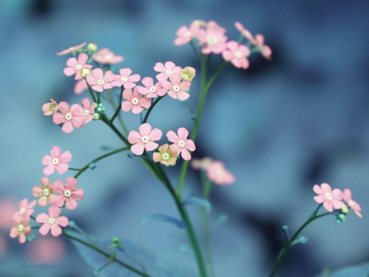 Lovely small Garden Flowers - GabriellasArt by Gabriella Weninger-David