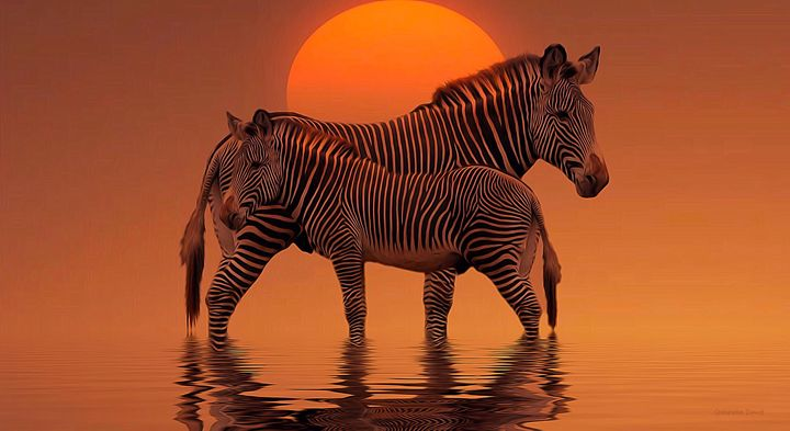 Two Zebras in the Sunset - GabriellasArt by Gabriella Weninger-David