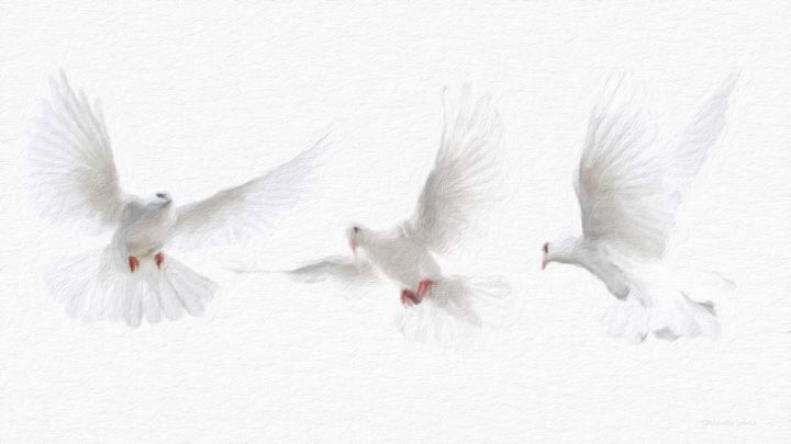 Three White Doves - GabriellasArt by Gabriella Weninger-David