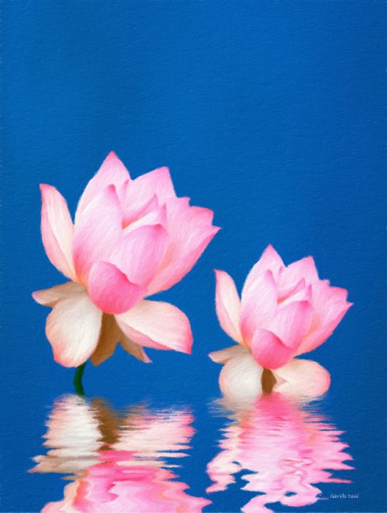 Lovely Water Flowers - GabriellasArt by Gabriella Weninger-David