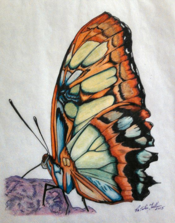 The Cathedral Butterfly illustration - Natalie Fuller