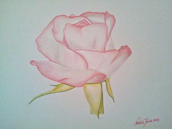 Pale Pink Rose - Natalie Fuller