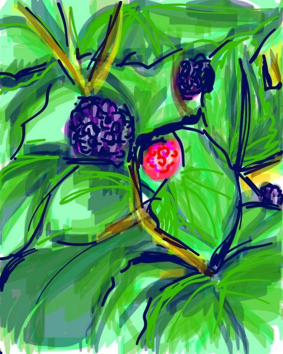 Blackberries - Susan Hess