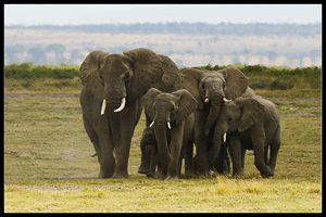 Tusk family
