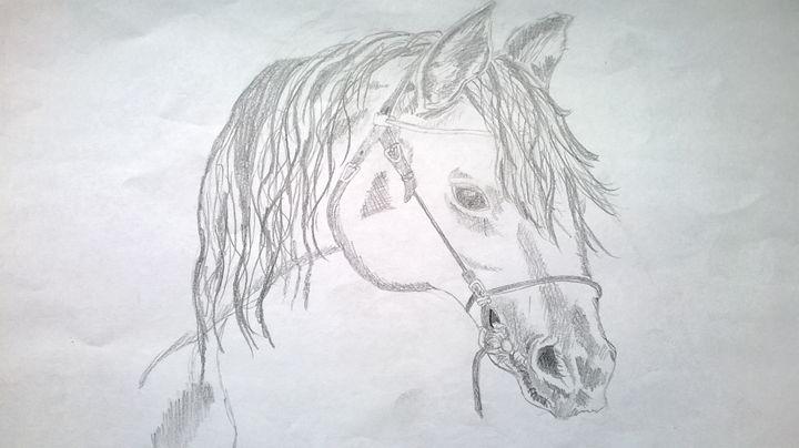 horsey - Collierz