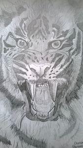 tiger fever