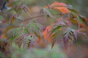 Fall colorful leafs