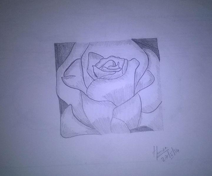 Pencil Sketch - Rose - Saanvi Arts