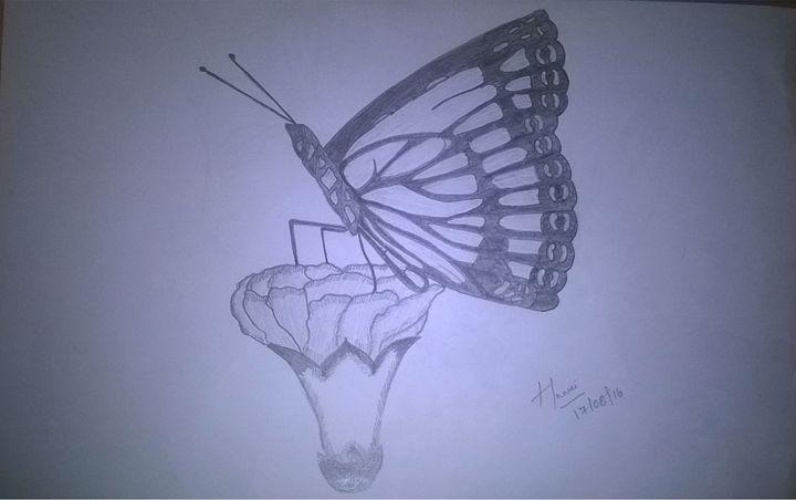 Butterfly sketch - Saanvi Arts