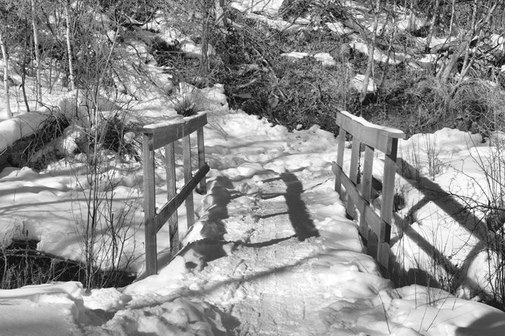 Bridge in Black and White - Photography by Shellee