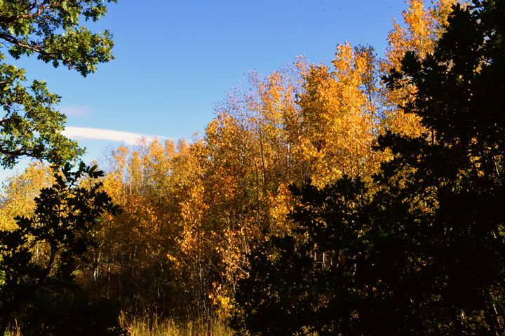 Autumn Trees - Photography by Shellee