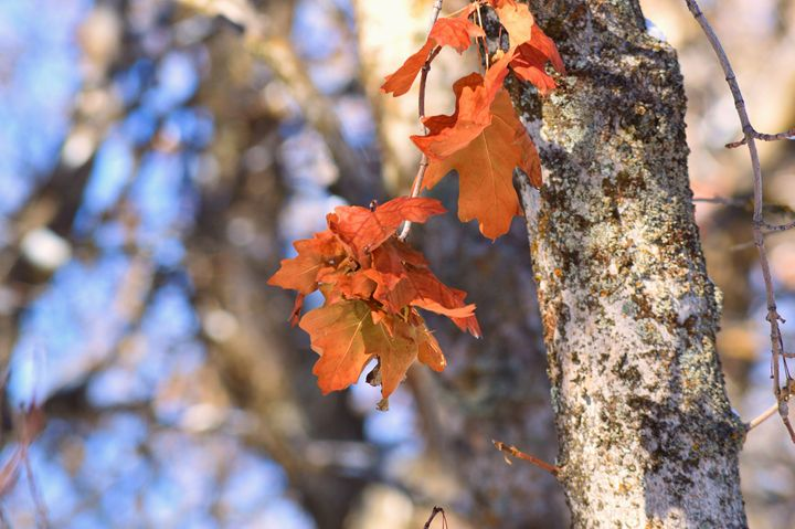 Cluster of Autumn - Photography by Shellee