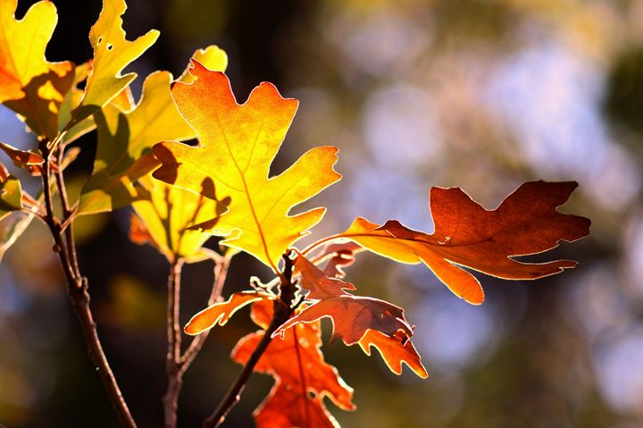 Colors of Autumn - Photography by Shellee