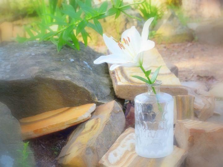 Soft White Lily - Desimay's Fine Art