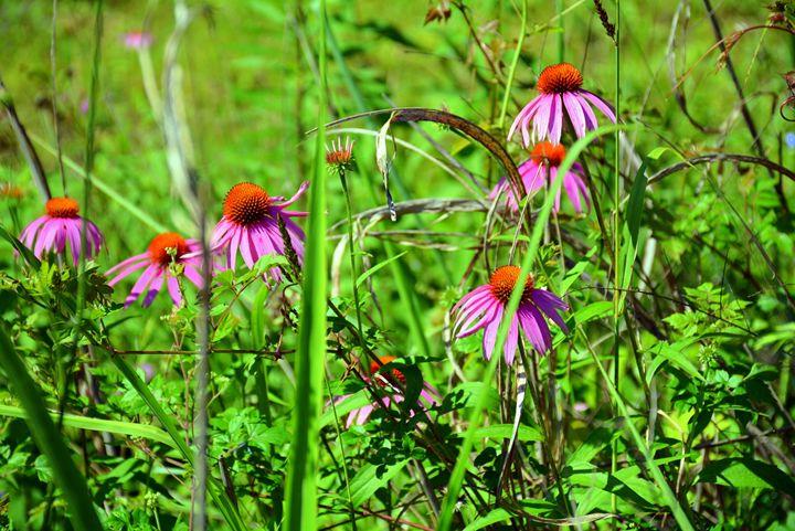 Wild Purple - Desimay's Fine Art