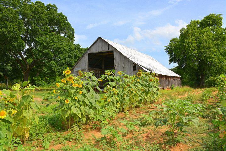 Old Oklahoma Barn - Desimay's Fine Art