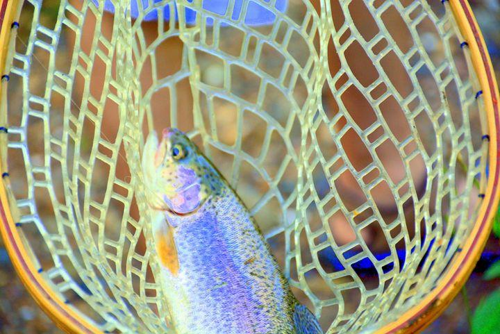 Fresh catch Trout fish - Desimay's Fine Art