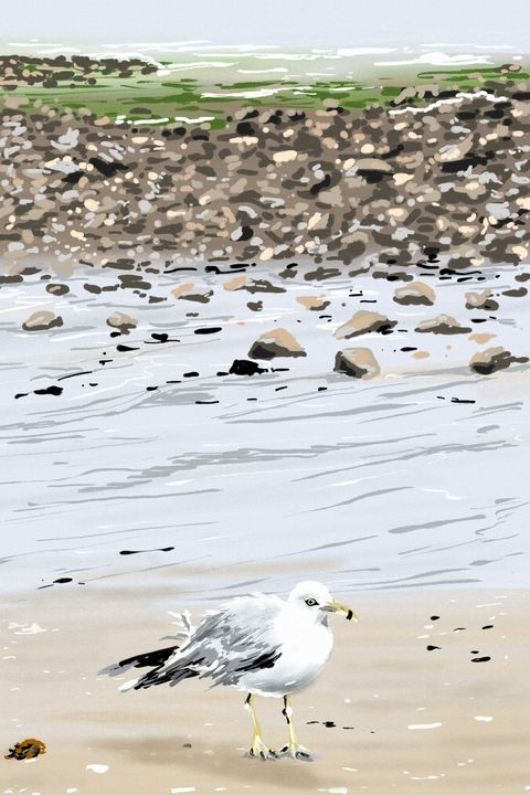 Seagull - Antoine Khanji