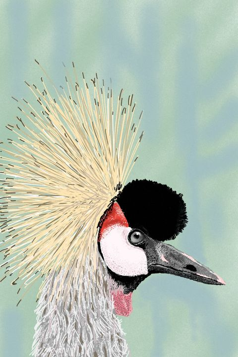 Grey Crowned Crane - Antoine Khanji