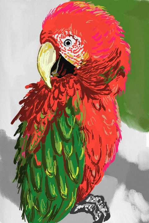 Red and Green - Antoine Khanji - Digital Art, Animals, Birds, & Fish,  Birds, Parrots, Parakeet & Rosella - ArtPal