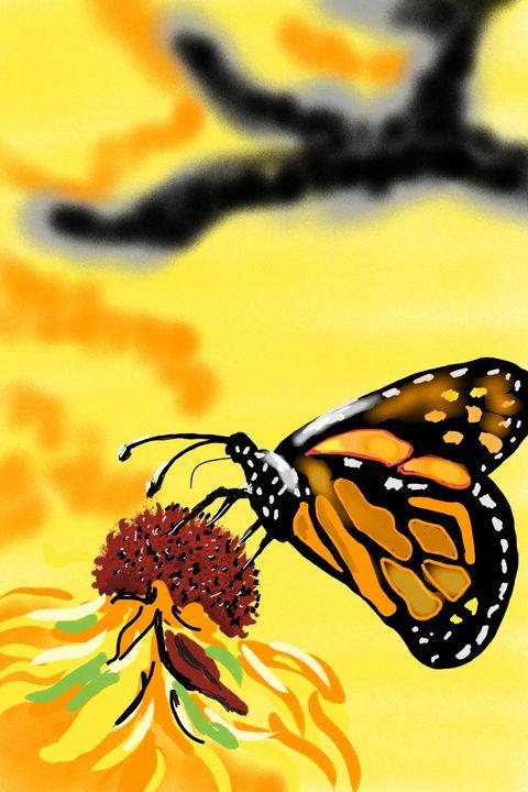Monarch butterfly - Antoine Khanji