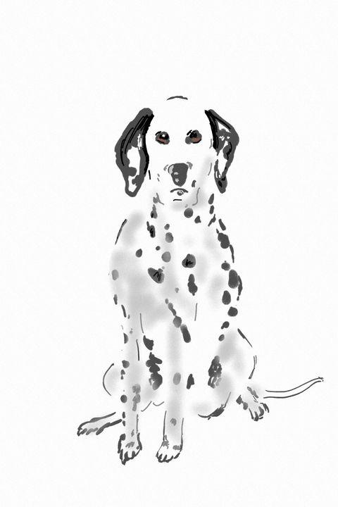 Dalmatian - Antoine Khanji
