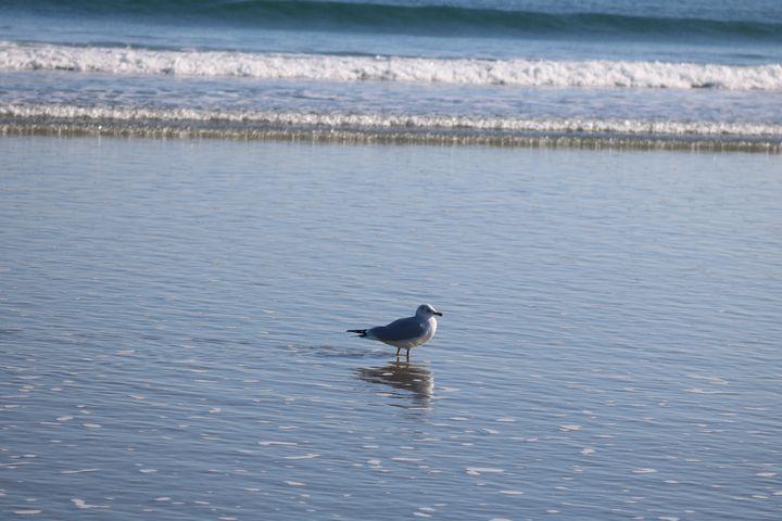 Seagull reflection (1) - Antoine Khanji