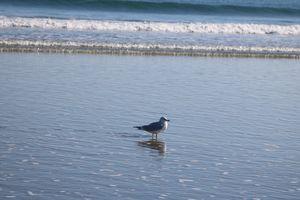 Seagull reflection (1)